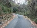 191221集落を抜け、木立の中を三国越林道に向かう