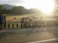 191228朝の飛火野の鹿