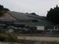 200111茶畑に霜