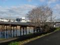 自歩道橋で鴨川を渡り右岸へ