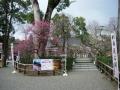 200208境内梅林の梅