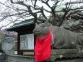 200208手水舎横の牛と梅