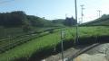 190914和束から加茂へ、山腹の茶畑を抜ける