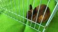 191124ニトリモールの移動動物園ウサギ