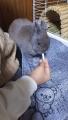191221ウサギと遊ぶ