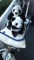 200102布団と一緒にパンダも干す
