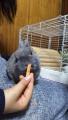 200221今日もウサギと遊ぶ