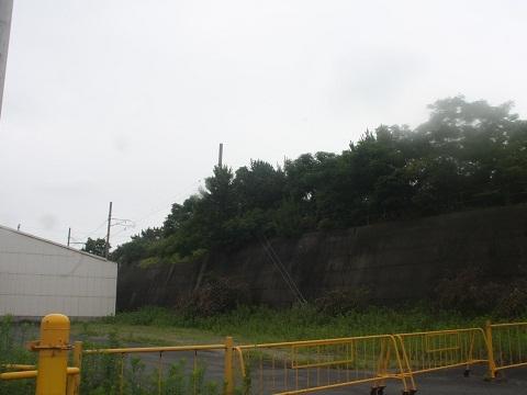nk-wakayamako-6.jpg
