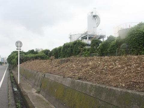 nk-wakayamako-7.jpg