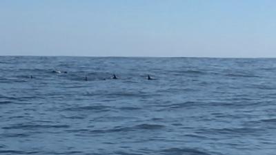 イルカの群れを発見!!(YouTubeムービー)