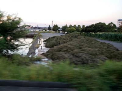 北山田漁港のに山積みされた刈り取った水草
