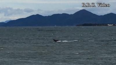 大荒れの琵琶湖北湖 バスボートが走ってるけど大丈夫かぁ〜!?(YouTubeムービー)