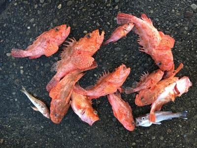 10月6日のWILDCAT釣果の一部