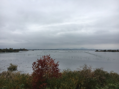 山ノ下湾から眺めた琵琶湖北湖(11月27日13時頃)