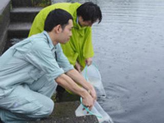 彦根旧港湾にワタカの稚魚を放流する滋賀県北部流域下水道事務所職員