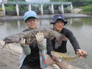 昨年の特定外来魚釣り大会でキャッチされた70cmのチャネルキャットフィッシュ