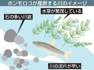 ホンモロコが産卵する川のイメージ
