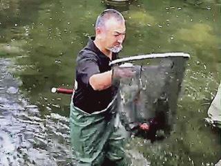 水が抜かれた池で熱帯魚を捕獲するボランティア