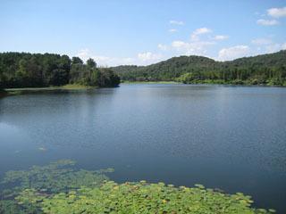 小野の鴨池