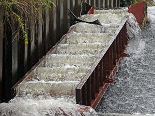 家棟川の支流中ノ池川に設置された魚道