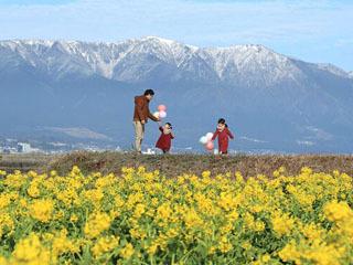 守山の第1なぎさ公園は早咲きの菜の花が見頃