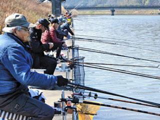 早くもシーズンを迎えた長命寺川のホンモロコ釣り