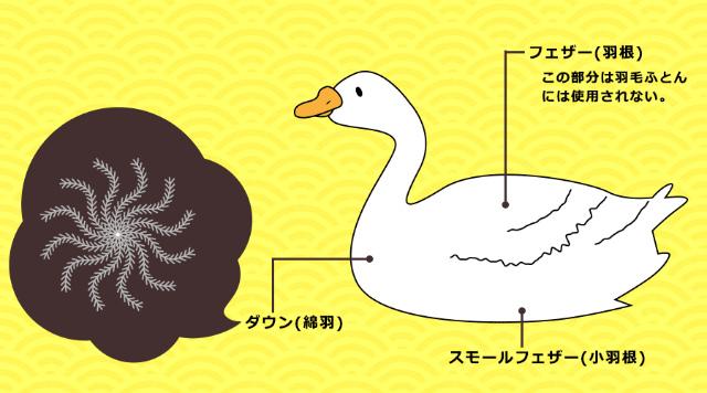 feather-1.jpg