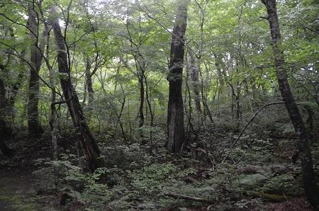 20190624福島緑の百選06