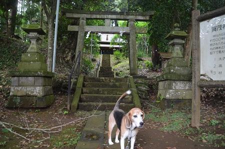20190708賀茂神社の大杉06