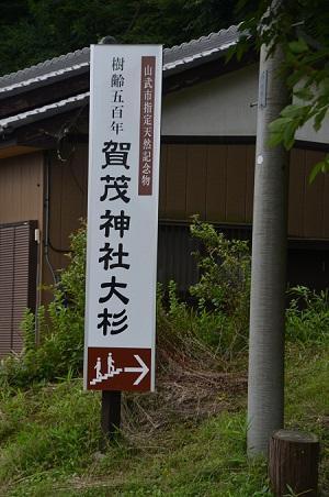 20190708賀茂神社の大杉02