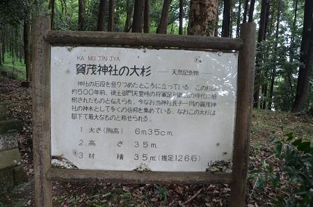 20190708賀茂神社の大杉07