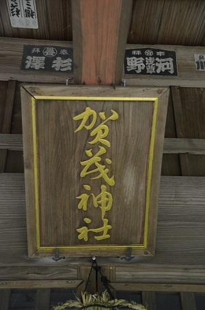 20190708賀茂神社の大杉15