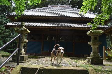 20190708賀茂神社の大杉13