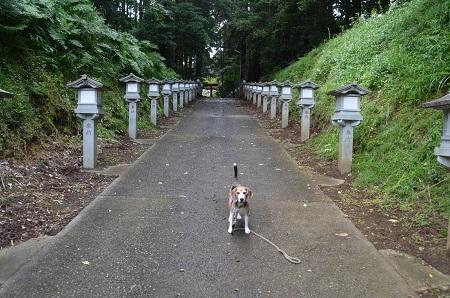 20190708成東八幡神社04
