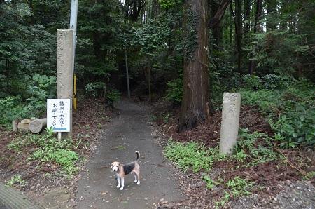 20190708成東八幡神社29