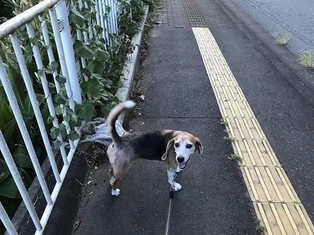 20190812散歩02