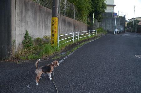 20190813散歩05