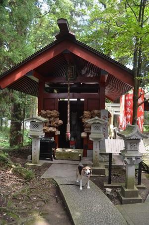 20190826大杉神社19
