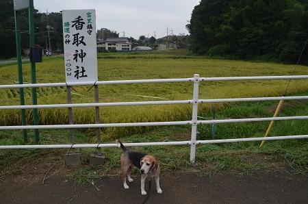 20190904冨里香取神社08