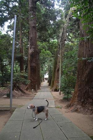 20190904東金日吉神社09