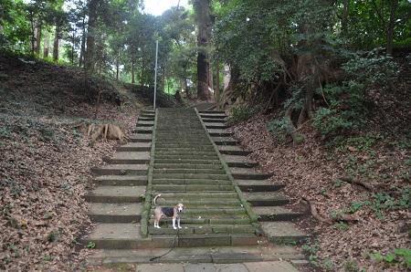 20190904東金日吉神社08