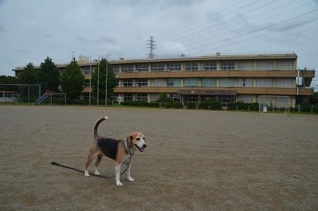 0190921藤沢小学校07