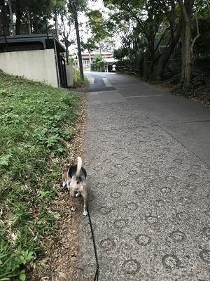 20190923八幡坂12