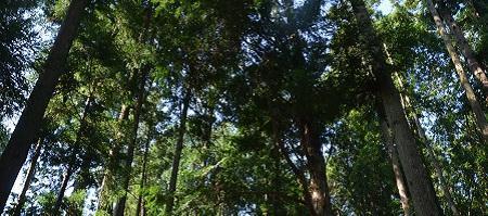 20191002茨城百景 小松寺07