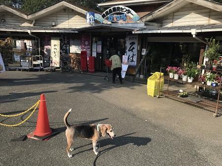 20191002道の駅かつら05