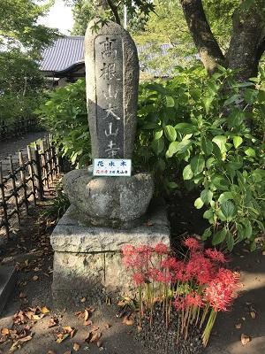 20191002花の寺 大山寺25