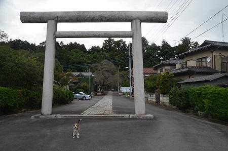 20191007稲田神社02