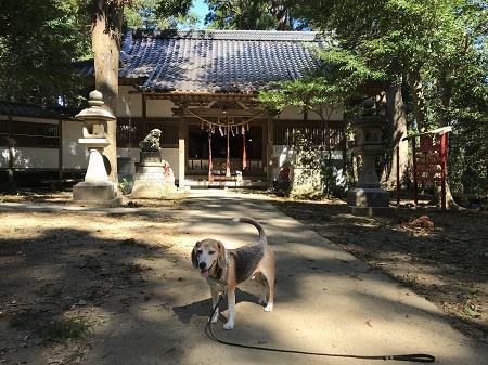 20191013日吉神社09