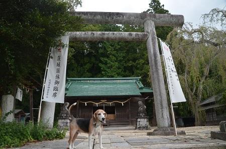 20191007八坂神社03