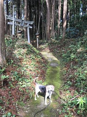 20191013椎崎八幡神社06